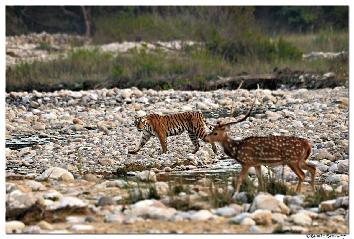 5 Great Wildlife Photographers in India Whose Work You Must Follow